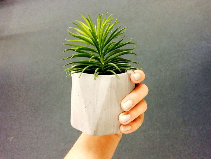 Cropped Hand Holding Houseplant Against Wall