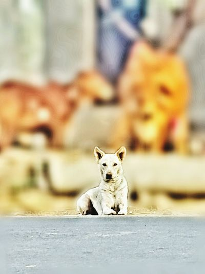 Indian street dog... Dogslife Aggressive A Little Attitude Never Hurt Nobody...