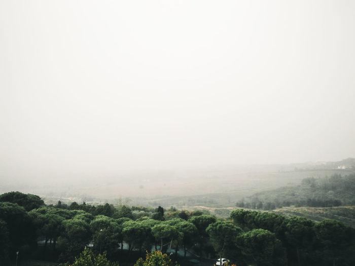 Tree Fog Forest Tea Crop Rural Scene Sky