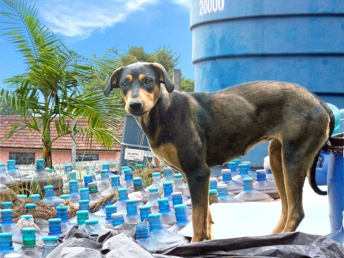 Taigra: a guardiã do óleo Animal Themes Domestic Animals Pets Building Exterior Day No People One Animal Dog Sky Tree Mammal Water Outdoors Swimming Pool Architecture EyeEmNewHere