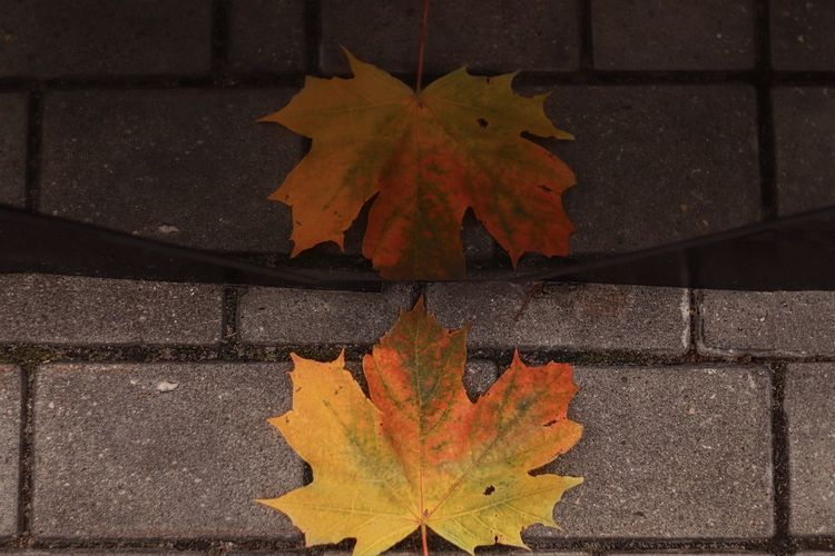 High angle view of maple leaf on sidewalk