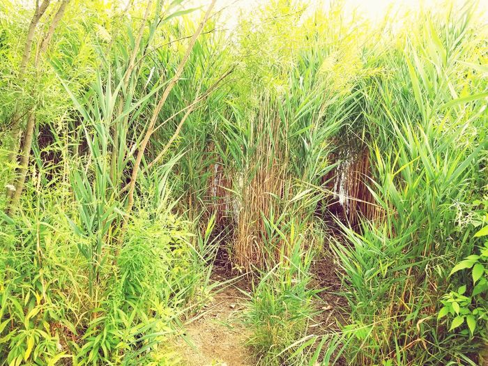 Nature Backgrounds Growth Grass Green Color Nature Full Frame Day Plant Outdoors No People Beauty In Nature Close-up