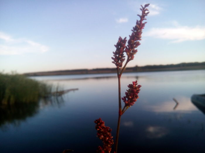 EyeEm Selects Nature Beauty In Nature Reflection Flower Tree Lake Water Sky Plant Red Growth Tranquility No People Outdoors Scenics Winter Sunset Day Fragility Freshness