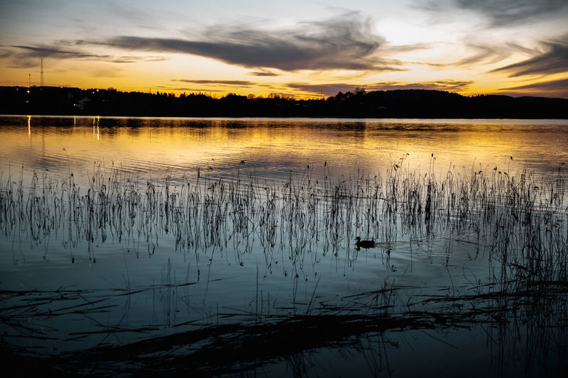 Water Sunset Sky Tranquility Beauty In Nature Tranquil Scene Reflection Scenics - Nature Cloud - Sky Lake Silhouette Nature No People Plant Idyllic Non-urban Scene Orange Color Outdoors Tree EyeEm Best Shots EyeEm Nature Lover EyeEm Selects