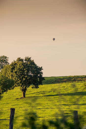 Beauty In Nature Burgundy Clear Sky Day Field Freshness Grass Green Color Growth Hot Air Balloon Landscape Mid-air Nature No People Outdoors Scenics Sky Sunset Tranquil Scene Tranquility Tree