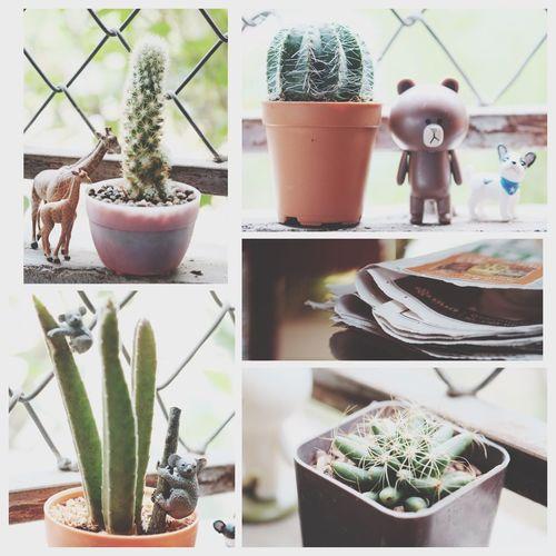 Cactus Byfaiifer Cony Brown