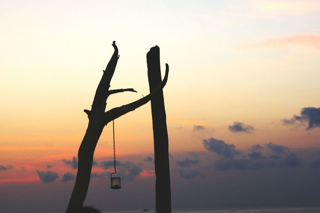 Dead tree Bali, Indonesia Silhouette Dark Sunset Silhouette Nature Sky Outdoors Beauty In Nature No People Tree Scenics
