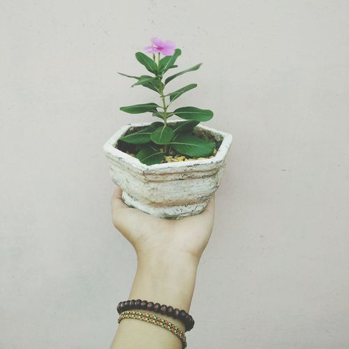 Love yourself and enjoy life.🌾 Growth Growing Freshness Green Nature Flower Pot Plant Indoors  Close-up