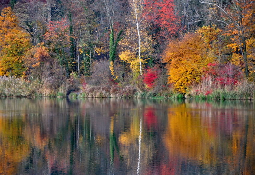 EyeEmNewHere EyeMeNewHere Reflection Autumn Beauty In Nature Card Card Design Change Colorful Colorfultree Day Forest Indiansummer Lake Leaf Multi Colored Nature No People Outdoors Reflection Scenics Tranquil Scene Tranquility Tree Wallpaper Water EyeEmNewHere EyeEm Ready