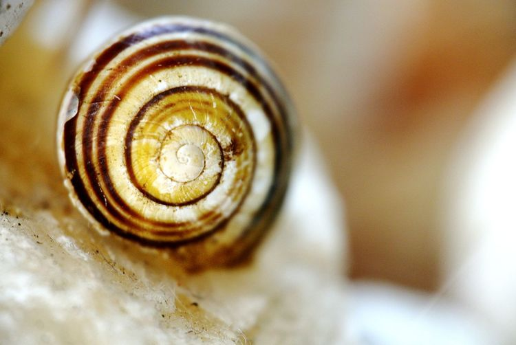 Snailshell Macro AndIloveyouforever Spiral Backgrounds Snail Close-up Animal Themes