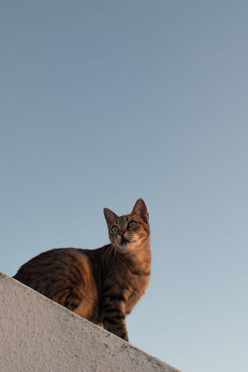 Low angle view of cat against clear sky