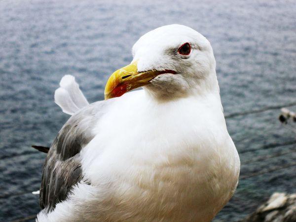 """Not shy"". Birds Birds🐦⛅ Bird Photography Seagulls Sea Life Nature Photography Animals Animal_collection Animal Posing Eyeemfilter F3 max level"