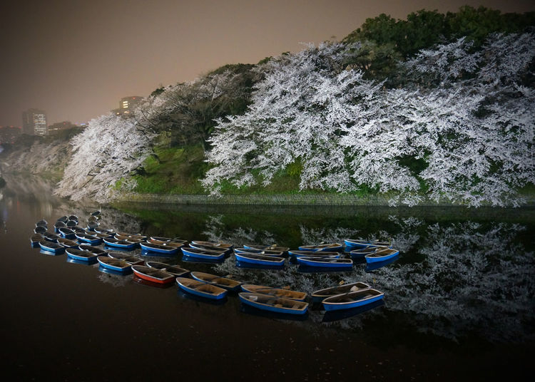 2013 Beauty In Nature Cherry Blossom Chidorigafuchi Mirror Nature Nautical Vessel Night Outdoors Pedal Boat River Rowboat Tree Water ボード 千鳥ヶ淵 夜桜 桜