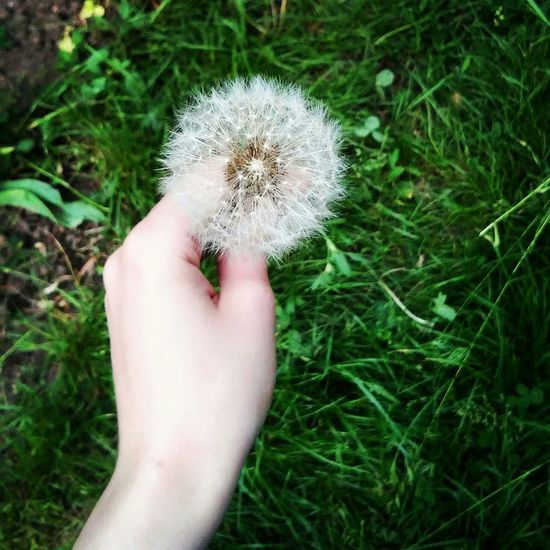 Single Dandelion Flowers Flowers, Nature And Beauty Flower Collection Myvillage💜 Beautiful ♥ Summer ☀ Beautiful Nature Relaxing