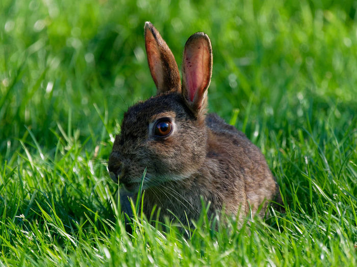 Close-up of an animal on grass