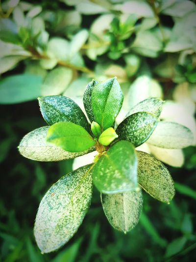 Plant Growth Close-up Leaf Nature Freshness Fragility Green Color Beauty In Nature Focus On Foreground Selective Focus Flower Day Outdoors Botany Green New Life Springtime Tranquility Growing Taking Photos No People GREEN IS GOOD