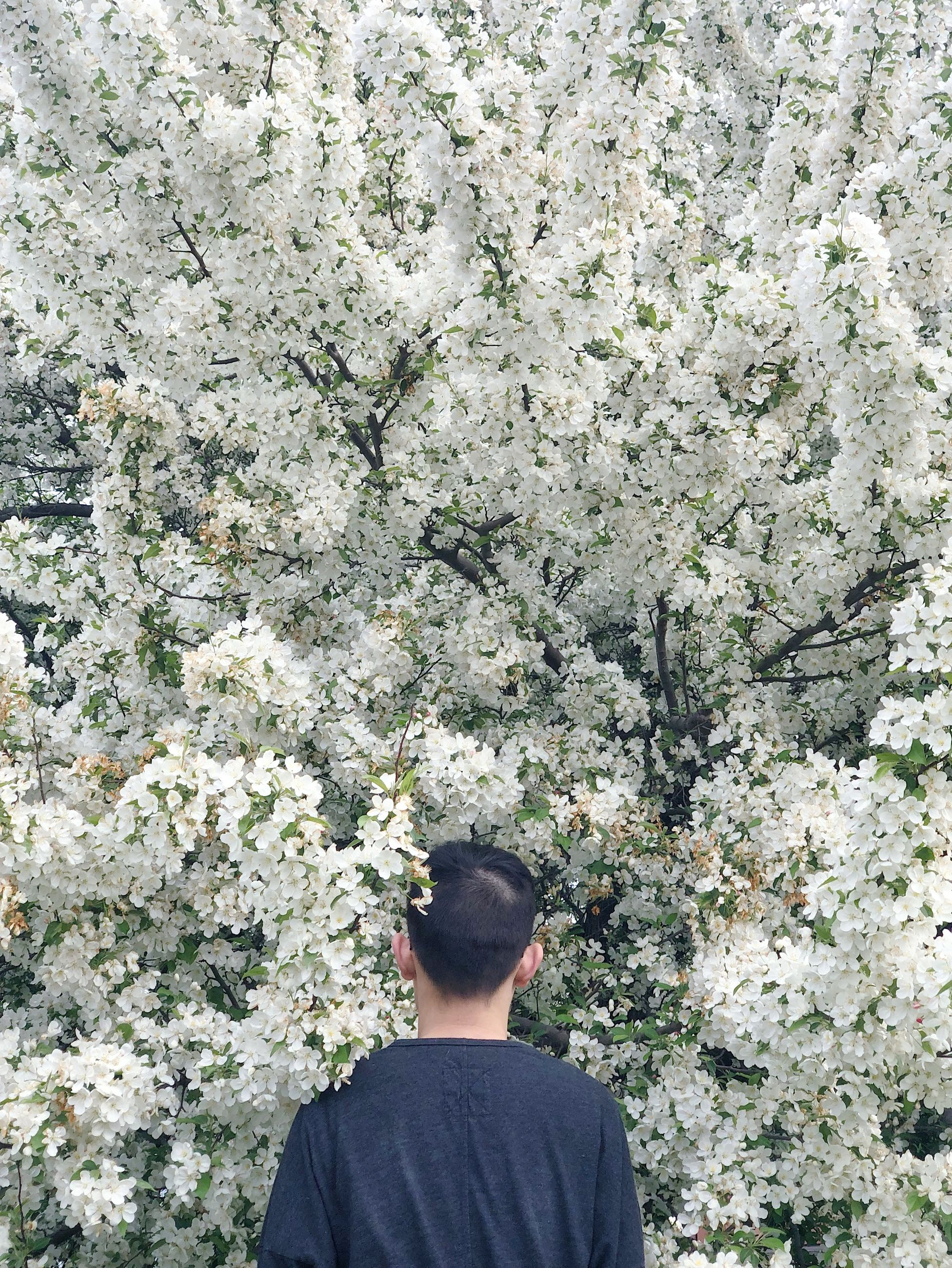 one person, rear view, real people, leisure activity, plant, lifestyles, growth, men, day, tree, standing, nature, flowering plant, flower, outdoors, beauty in nature, casual clothing, young adult, young men, cherry blossom