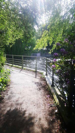 Alsterwanderweg in Hamburg. Fresh path for biking Alster Alsterpark Alsterwasser Fahrradtour Wanderweg Hamburg Grüne Stadt Grünanlagen Halo Gegenlicht Freude