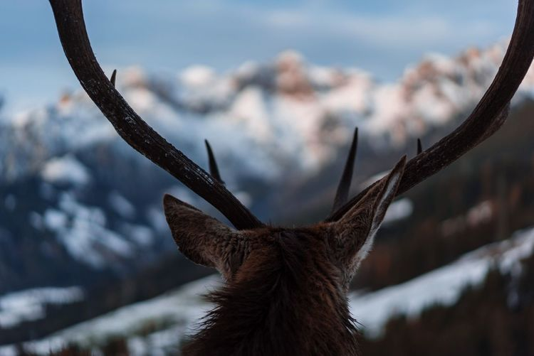 Close-up of deer against sky