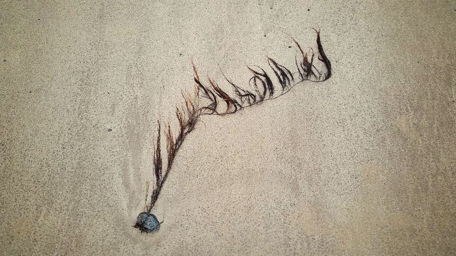 Beach Sealife