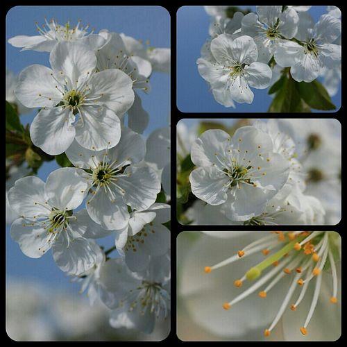 Thank you for invitation nur @dagli ! Nature Spring Nature_collection Quadrofabulous Eye4macro