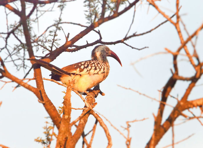 Animal Themes Animal Wildlife Animals In The Wild Bare Tree Beauty In Nature Bird Branch Close-up Day Low Angle View Nature No People One Animal Outdoors Perching Tree