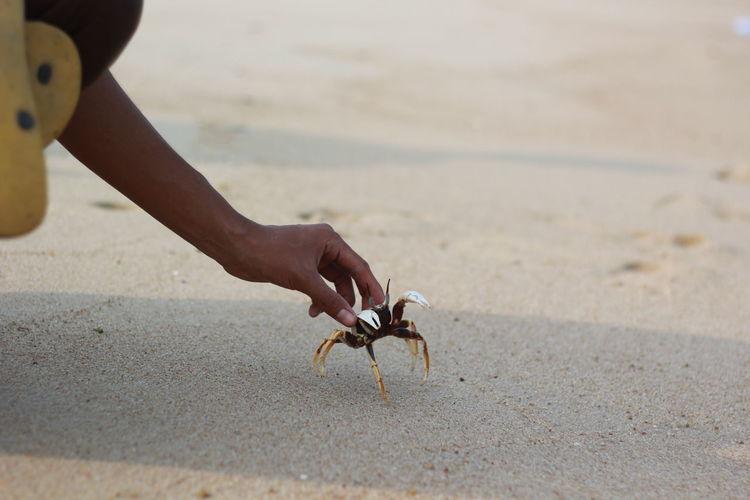 Close-up of hand holding crab at beach