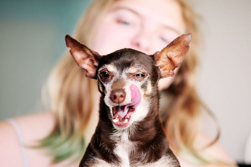 Animal Themes Brown Chihuahua Cute Pets Dog Family Funny Licking Looking At Camera Miniature Pinscher One Animal One Person People Pets Portrait Real People Young Women EyeEm Selects