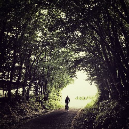 Lonely cyclist in wooded tunnel Summer Trees Lightandshadow Light Road Nature Racebike Sportsman Sport One Person Tunnel Woods Cycling
