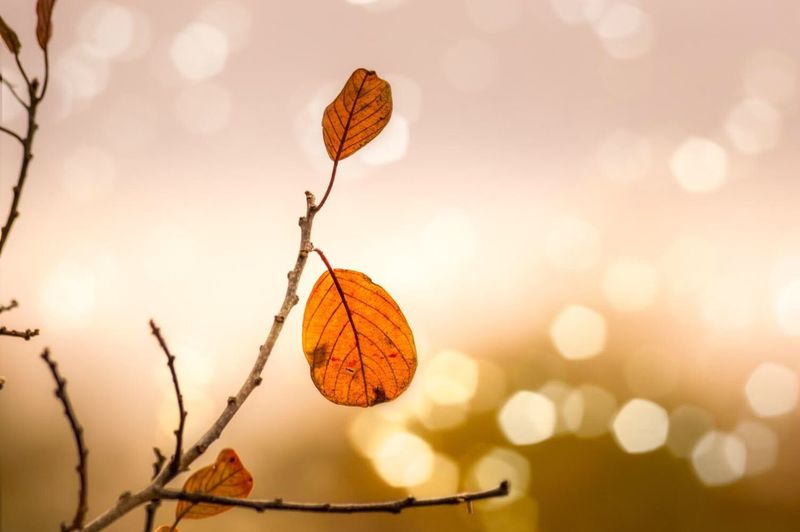 Close-up of autumn leaves on tree against sky
