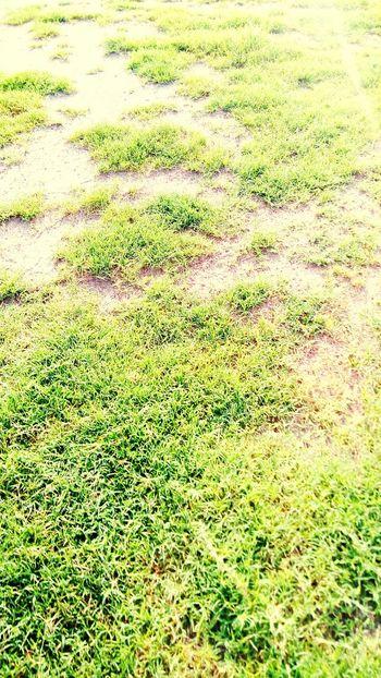 Field Grass Green Greenery Fresh Grassy Grass Area