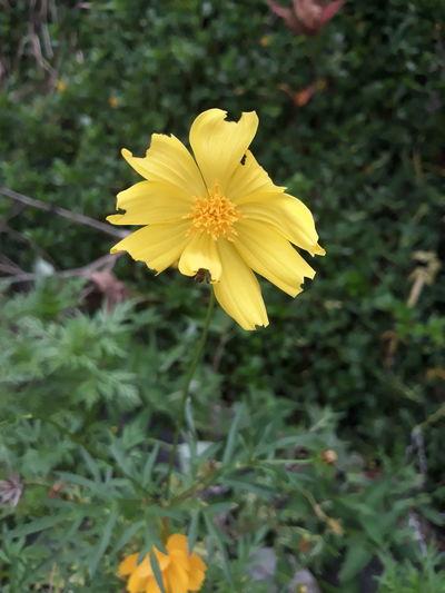 EyeemPhilippines Flower Head Flower Yellow Petal Close-up Plant Animal Themes Wildflower