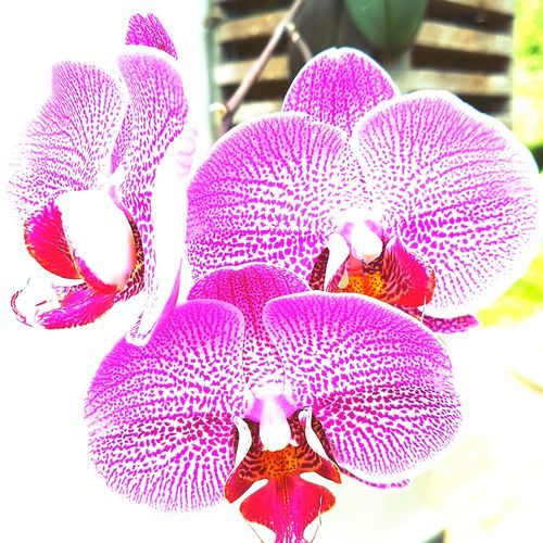 Flower Purple Nature Orchid Beauty In Nature Caribbean_beautiful_landscapes Caribbean Life