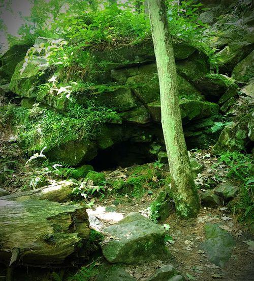 Leprechauns living in Wisconsin 😜☘ Leprechaun Rock Formations Rock Formation Leprechaun House Leprechauns Emerald Green Color Green Rock House Cave Rock Trees Moss Tree Trunk Tree Rocks