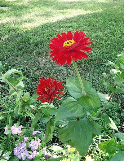 Pretty flower.