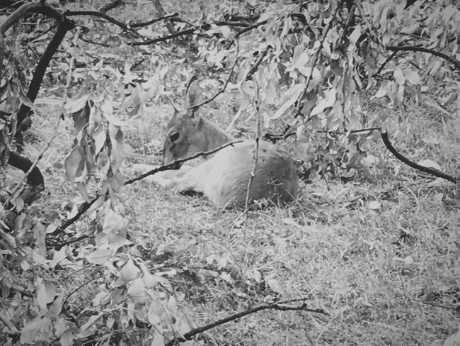 Animal Themes Animals In The Wild Mammal No People Day Nature Outdoors Tree Duiker TheWeekOnEyeEM