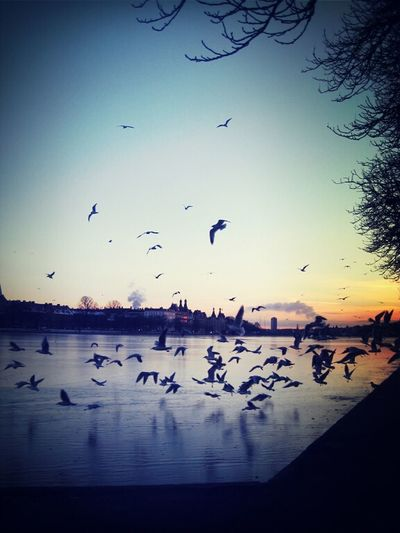 Sunset Urban Birds City Nature Frozen Lake #lakes In #Copenhagen Copenhagen Skyline Citynature