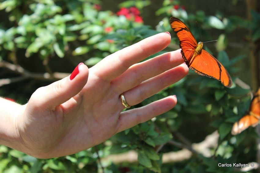 Butterfly Human Hand Butterfly - Insect Day Insect Fotografia Photography Relaxation Butterfly BORBOLETA Mãos