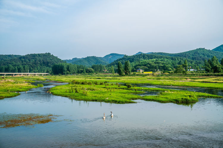 The beautiful scenery of mountains and rivers in the countryside Beautiful Beautiful Scenery Beijing Duckweed Garden Green Journey Lake Landscape Nature Outdoors Park Pinguin Plant Playing Quiet River Scenery Shore Tourism Water Sky Beauty In Nature Scenics - Nature Tranquil Scene Tranquility Day Tree Green Color Reflection Mountain Grass Animal Themes No People Environment