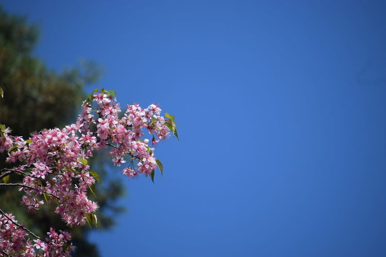 Clear Sky Blue Sky And Flowers Peaceful Blue Of