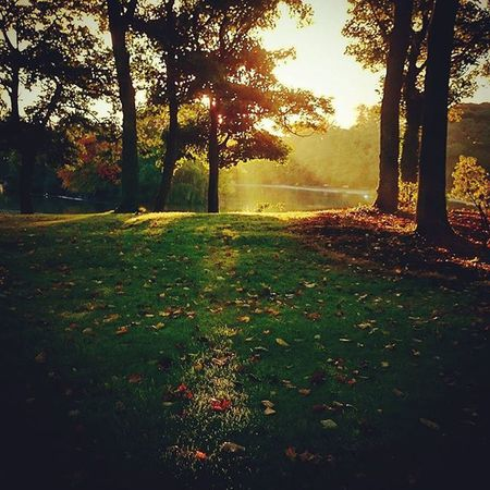 My walk to work was blessed with some.autumnal sun. Autuminuk Autumcolors Fallcolors Fallleaves Autumsun Leazespark Newcastlecitycentre NORTHEASTENGLAND Northeastcaptures