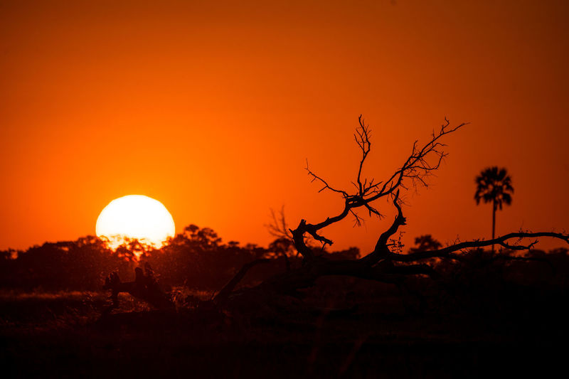 Botswana Africa Beauty In Nature Landscape Scenics - Nature Silhouette Sky Sunset Tranquility