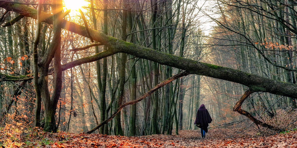 Late Autumn stroll in the woods. [43/365] 2016.11.21 Beauty In Nature Branch Broken Day Forest Growth Hood Landscape Landscape_Collection Landscape_photography Landscapes Nature One Person Outdoors Panorama People Sun Sunbeam Sunlight Sunset Tranquility Tree Tree Trunk Walking Woods