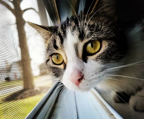 Domestic Cat One Animal Feline Indoors  Longing To Be Outside Portrait Pets Animal Themes Domestic Animals Close-up Day First Eyeem Photo