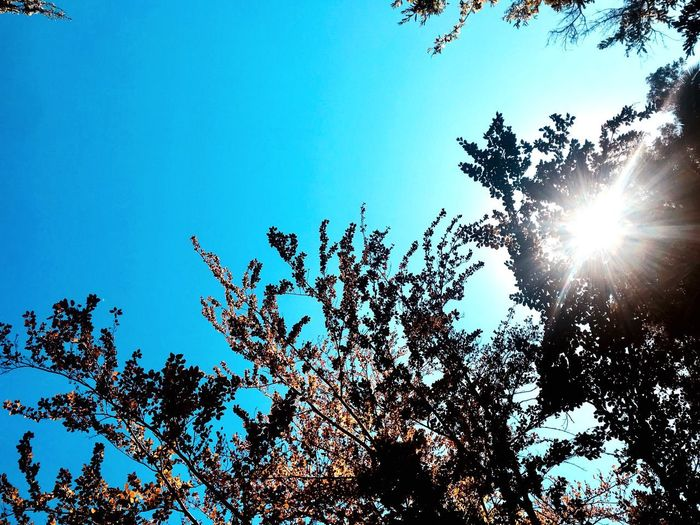 🍃🍃🍃 Low Angle View Clear Sky Silhouette Nature Sun Sunlight Outdoors Day No People Sky Freshness Beauty In Nature Animal Themes Tree