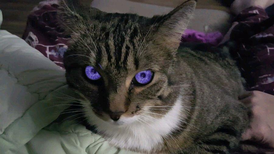 Cat Cat Eyes