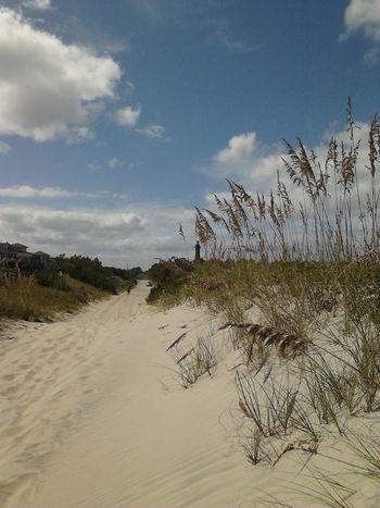 Salt Life Coastal Carolina Where Do You Swarm? Nature_collection