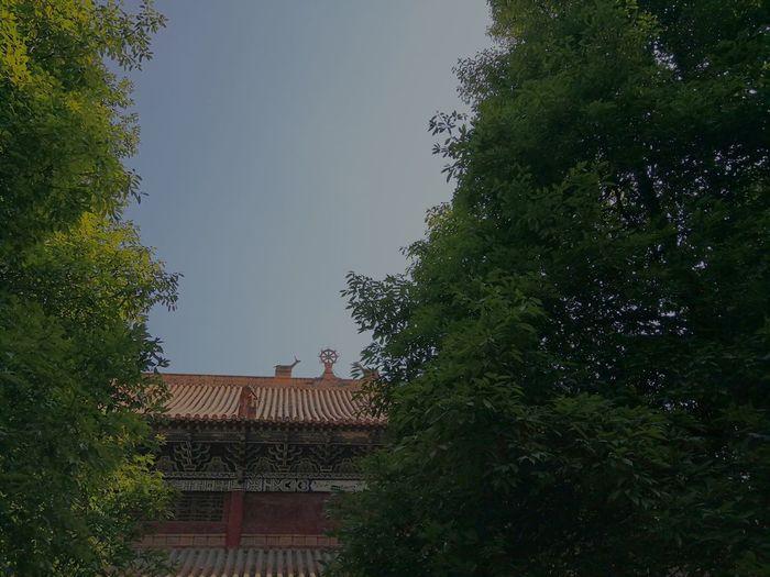 Tree Roof Sky