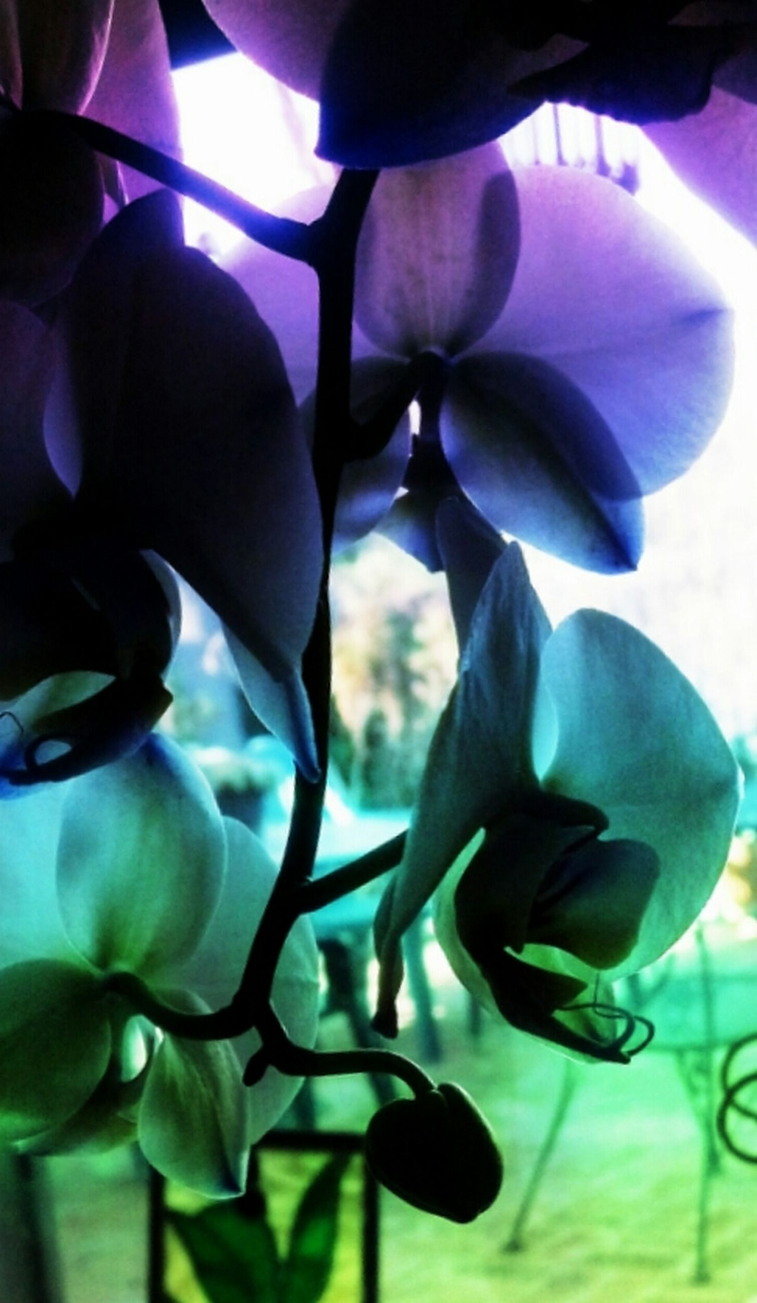 flower, growth, indoors, petal, close-up, fragility, plant, beauty in nature, freshness, nature, sunlight, flower head, no people, focus on foreground, purple, day, stem, orchid, leaf, selective focus