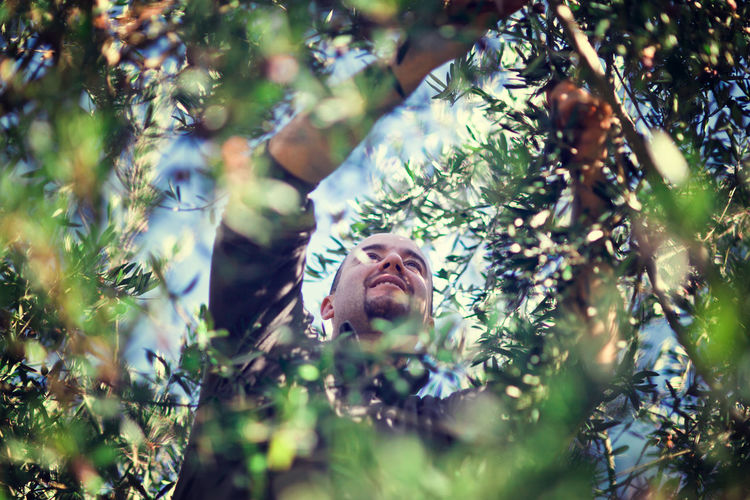 Man At Work Olive Olive Tree Traditional Culture Worker Italy Lifestyle Photography Manual Worker Men Olive Harvest Olive Harvesting Outdoor Photography Portrait Traditional Jobs